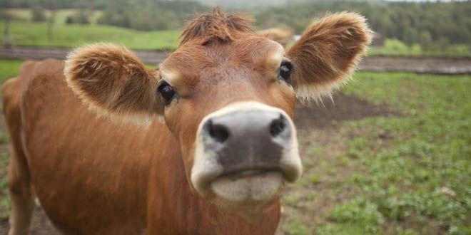 El bienestar animal importa