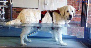 hidroterapia_perro