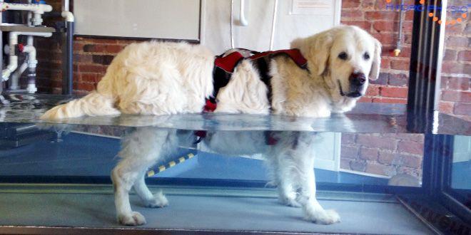Hidroterapia para perros