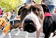 Super Cachorros – Cultura y Ciencias Caninas