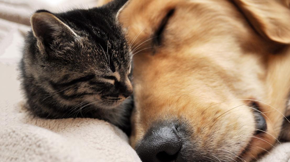 Videos divertidos entre perros y gatos