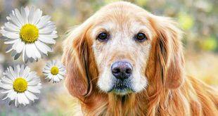 old-dog.jpg.838x0_q67_crop-smart