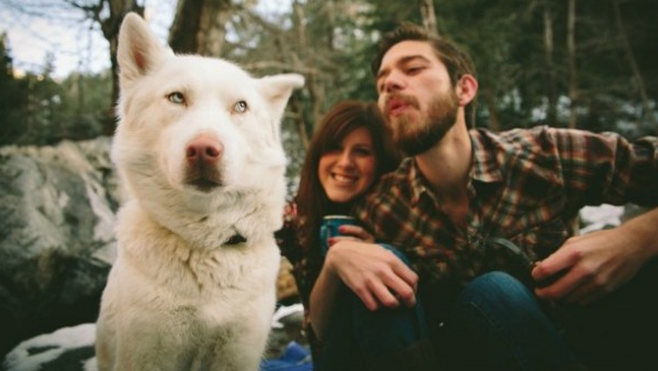 Los perros y los celos