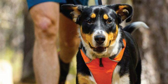 7 cosas que no debes hacer si corres con tu perro