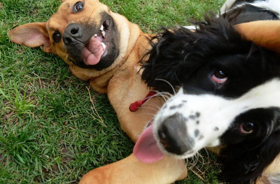 Todo sobre el juego canino