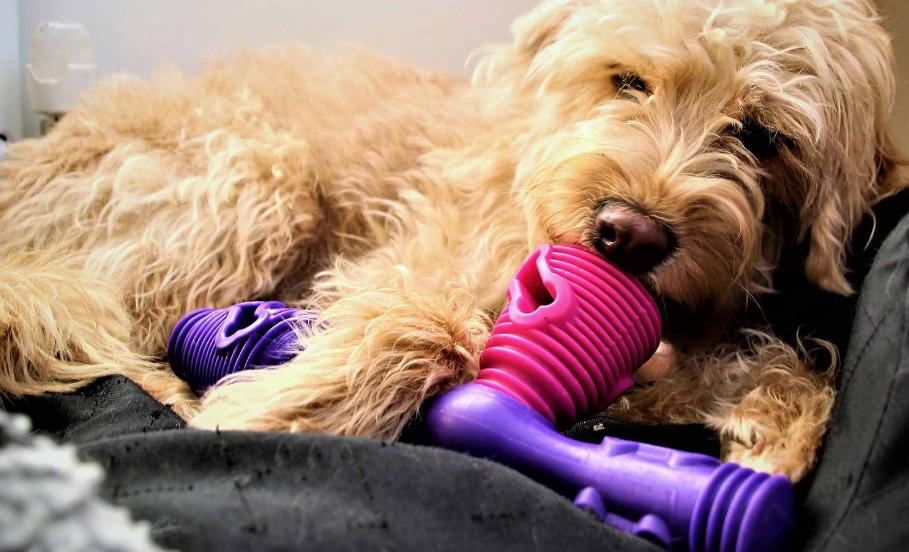 ¿Cuáles juguetes les gustan a los perros?