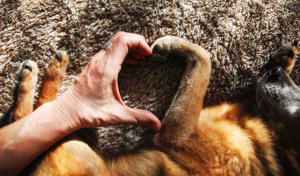 Cinco necesidades emocionales de tu perro