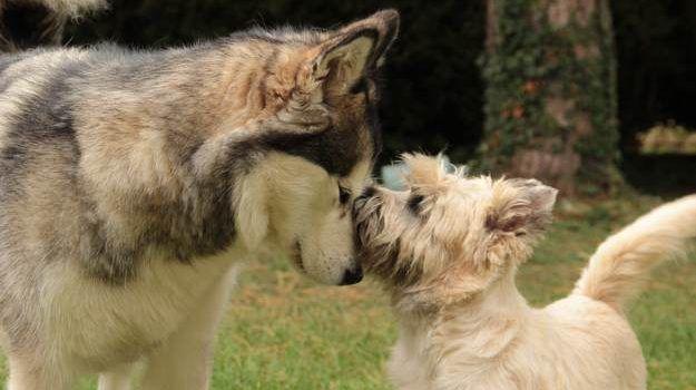 Perros Mejores Humanos