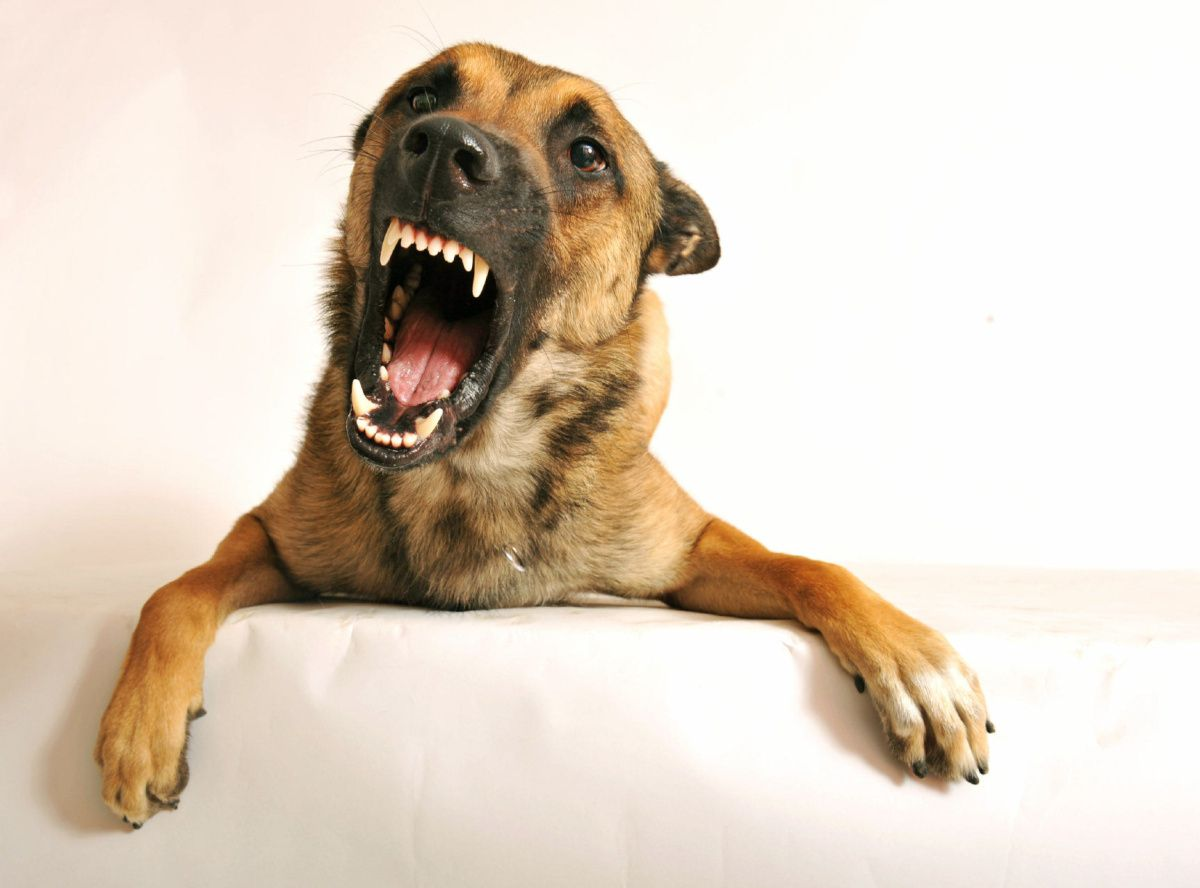 Perros que gruñen