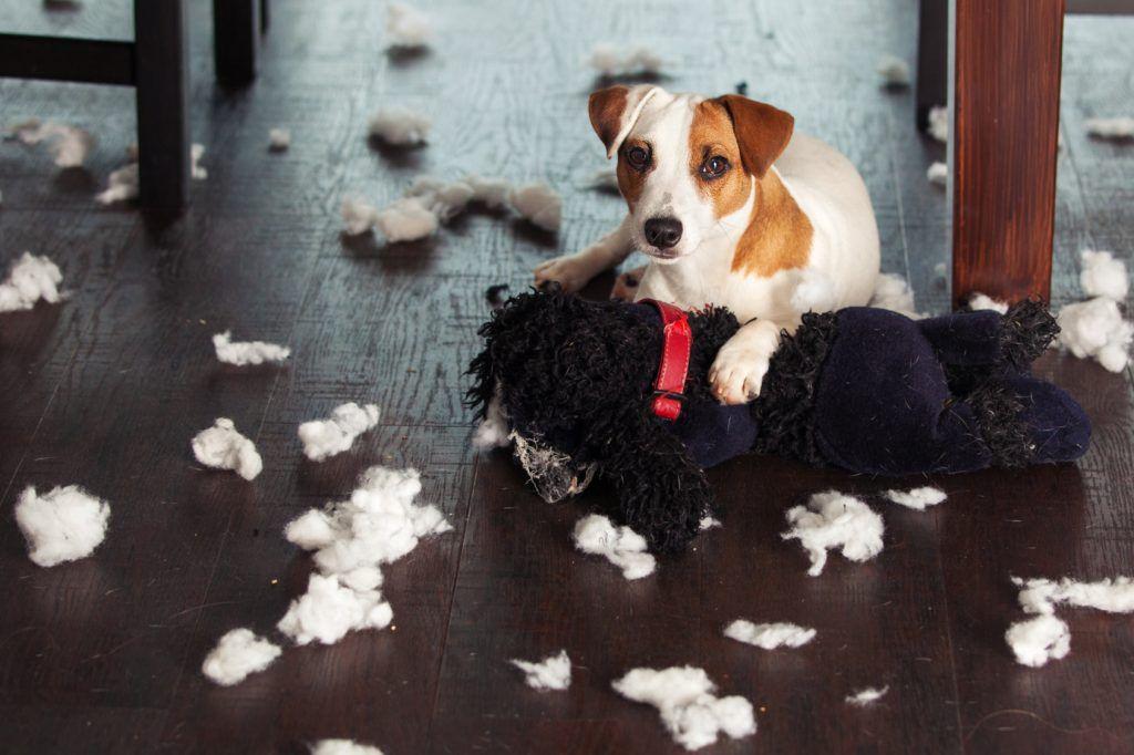 ¿Tu perro es muy latoso?