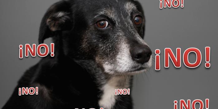 """¿Entiende Mi Perro Cuando Le Digo """"NO""""?"""