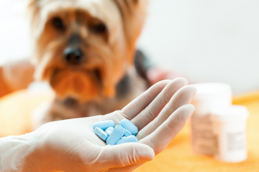 ¿Los antibióticos afectan la conducta de los perros?