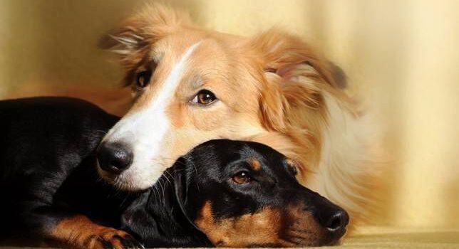 Tengo Un Perro… ¿y Si Adopto Otro?