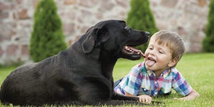 Perro Niños (1)