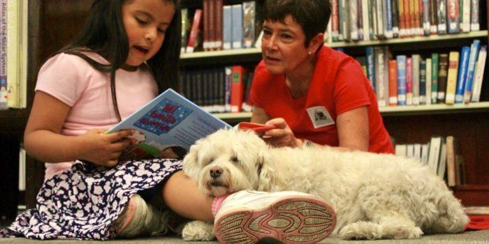 ¡Perros Que Enseñan A Leer! ¿Pero, Cómo Lo Hacen?